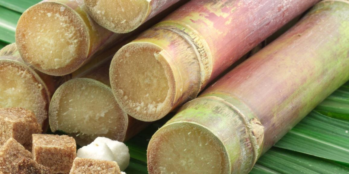 Residuos Orgánicos de la caña de azucar para generar energía limpia.